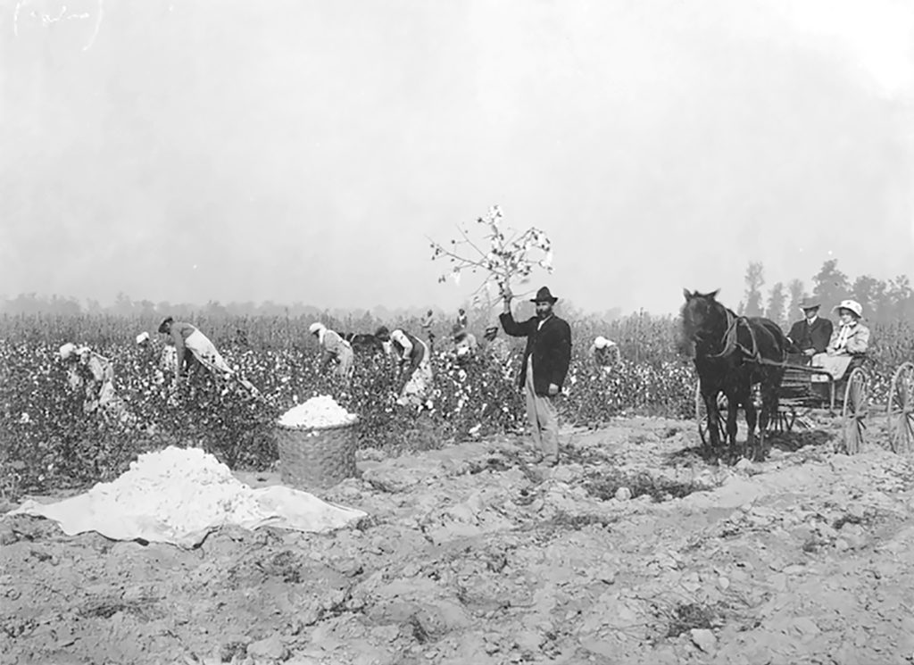 Farm workers in a cotton field being observed by two people sitting in a carriage in Arkansas in 1908.